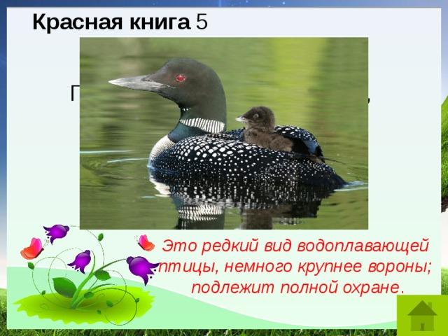 Красная книга 5 Гагарка. Это название гриба, птицы, бабочки? Это редкий вид водоплавающей птицы, немного крупнее вороны; подлежит полной охране .