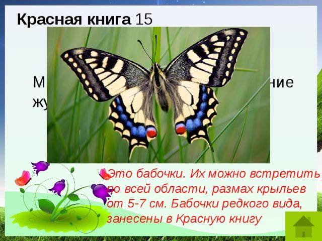 Красная книга 15 Махаон. Мнемозина. Это название жуков, моллюсков, бабочек? Это бабочки. Их можно встретить по всей области, размах крыльев от 5-7 см. Бабочки редкого вида, занесены в Красную книгу
