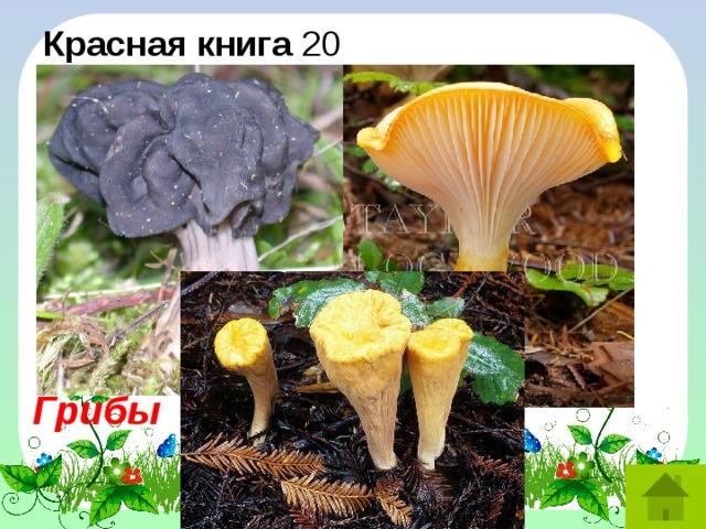 Красная книга 20 Гельвелла ямчатая. Рогатик язычковый. Гигрофор желтый. Это названия лишайников, мха, грибов? Грибы