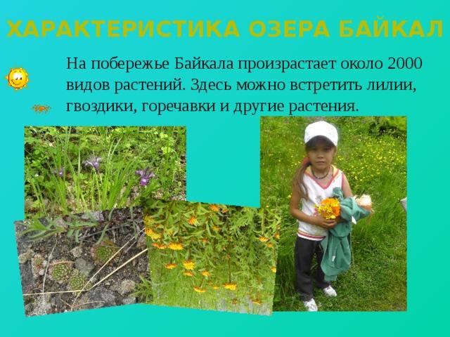 Характеристика озера байкал  На побережье Байкала произрастает около 2000 видов растений. Здесь можно встретить лилии, гвоздики, горечавки и другие растения.
