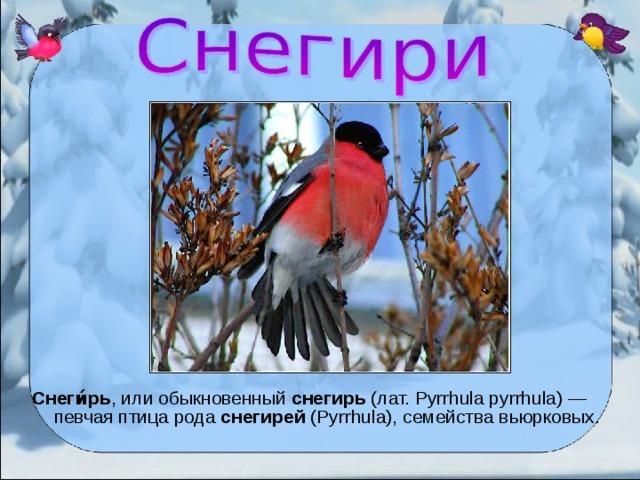 Снеги́рь , или обыкновенный снегирь (лат. Pyrrhula pyrrhula) — певчаяптица рода снегирей (Pyrrhula), семейства вьюрковых.