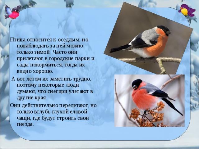 Птица относится к оседлым, но понаблюдать за ней можно только зимой. Часто они прилетают в городские парки и сады покормиться, тогда их видно хорошо.  А вот летом их заметить трудно, поэтому некоторые люди думают, что снегири улетают в другие края. Они действительно перелетают, но только вглубь глухой еловой чащи, где будут строить свои гнезда.