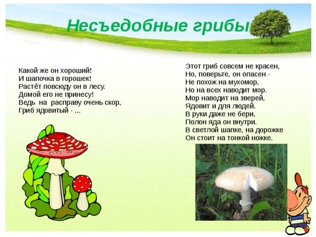 Несъедобные грибы Этот гриб совсем не красен,  Но, поверьте, он опасен -  Не похож на мухомор,  Но на всех наводит мор.  Мор наводит на зверей,  Ядовит и для людей.  В руки даже не бери,  Полон яда он внутри.  В светлой шапке, на дорожке  Он стоит на тонкой ножке. Какой же он хороший!  И шапочка в горошек!  Растёт повсюду он в лесу.  Домой его не принесу!  Ведь на расправу очень скор,  Гриб ядовитый - ...