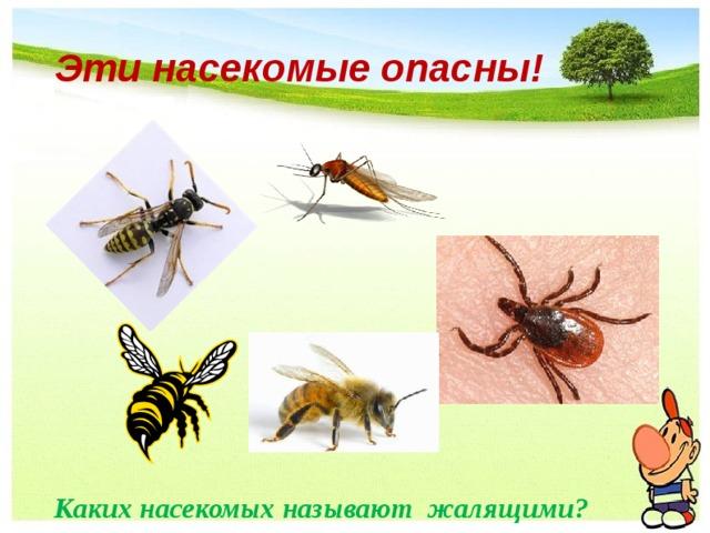 Эти насекомые опасны!  Каких насекомых называют жалящими?