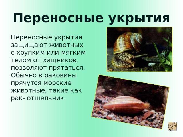 Переносные укрытия Переносные укрытия защищают животных с хрупким или мягким телом от хищников, позволяют прятаться. Обычно в раковины прячутся морские животные, такие как рак- отшельник.