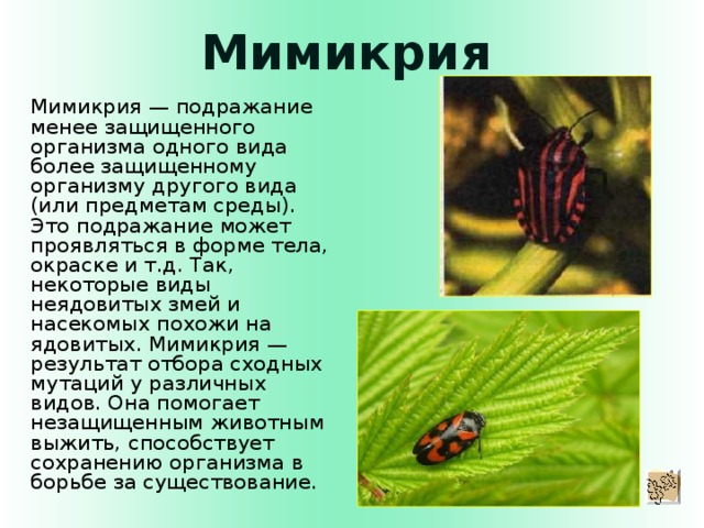 Мимикрия Мимикрия — подражание менее защищенного организма одного вида более защищенному организму другого вида (или предметам среды). Это подражание может проявляться в форме тела, окраске и т.д. Так, некоторые виды неядовитых змей и насекомых похожи на ядовитых. Мимикрия — результат отбора сходных мутаций у различных видов. Она помогает незащищенным животным выжить, способствует сохранению организма в борьбе за существование.