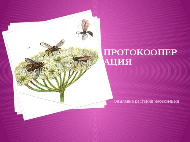 Протокооперация Опыление растений насекомыми
