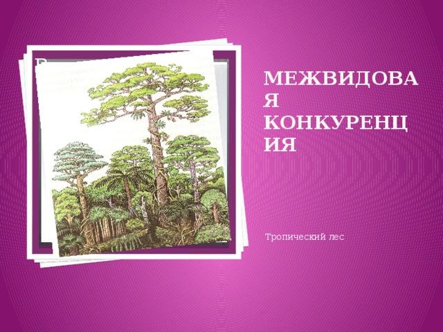 Вставка рисунка Межвидовая конкуренция Тропический лес