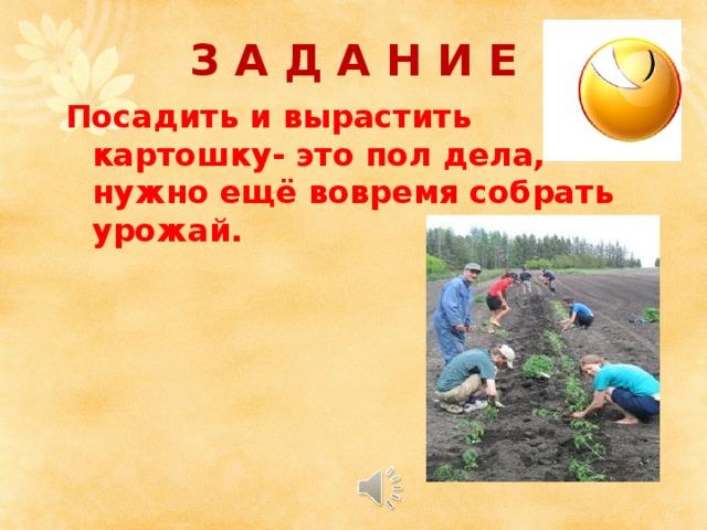 З А Д А Н И Е Посадить и вырастить картошку- это пол дела, нужно ещё вовремя собрать урожай.