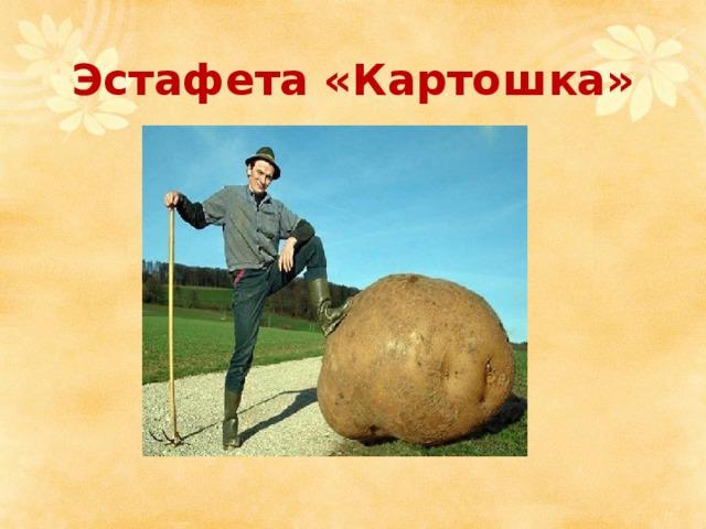 Эстафета «Картошка»