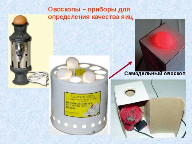 Овоскопы – приборы для определения качества яиц Самодельный овоскоп