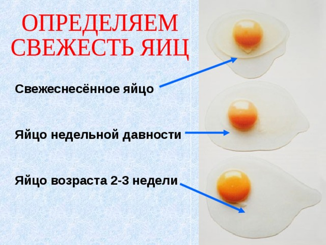 Свежеснесённое яйцо   Яйцо недельной давности   Яйцо возраста 2-3 недели