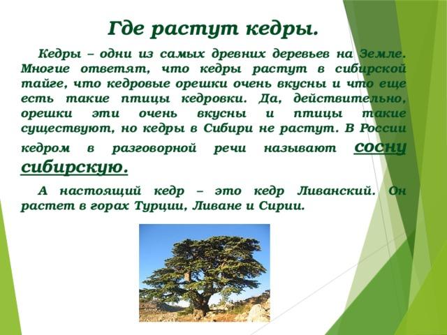 Где растут кедры. Кедры – одни из самых древних деревьев на Земле. Многие ответят, что кедры растут в сибирской тайге, что кедровые орешки очень вкусны и что еще есть такие птицы кедровки. Да, действительно, орешки эти очень вкусны и птицы такие существуют, но кедры в Сибири не растут. В России кедром в разговорной речи называют сосну сибирскую. А настоящий кедр – это кедр Ливанский. Он растет в горах Турции, Ливане и Сирии.