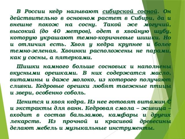 В России кедр называют сибирской сосной . Он действительно в основном растет в Сибири, да и внешне похож на сосну. Такой же могучий, высокий (до 40 метров), одет в хвойную шубу, которую украшают темно-коричневые шишки. Но и отличия есть. Хвоя у кедра крупнее и более темно-зеленая. Хвоинки расположены не парами, как у сосны, а пятерками. Шишки намного больше сосновых и наполнены вкусными орешками. В них содержатся масло, витамины и даже молоко, из которого получают сливки. Кедровые орешки любят таежные птицы и звери, особенно соболь. Ценится и хвоя кедра. Из нее готовят витамин С и экстракты для ванн. Кедровая смола – живица – входит в состав бальзамов, камфары и других лекарств. Из прочной и красивой древесины делают мебель и музыкальные инструменты.