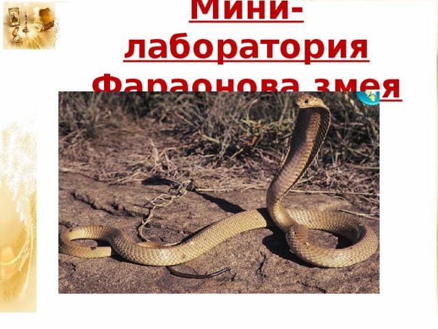 Мини- лаборатория  Фараонова змея