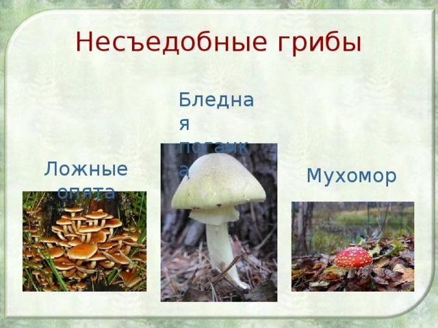 Несъедобные грибы Бледная поганка Ложные опята Мухомор