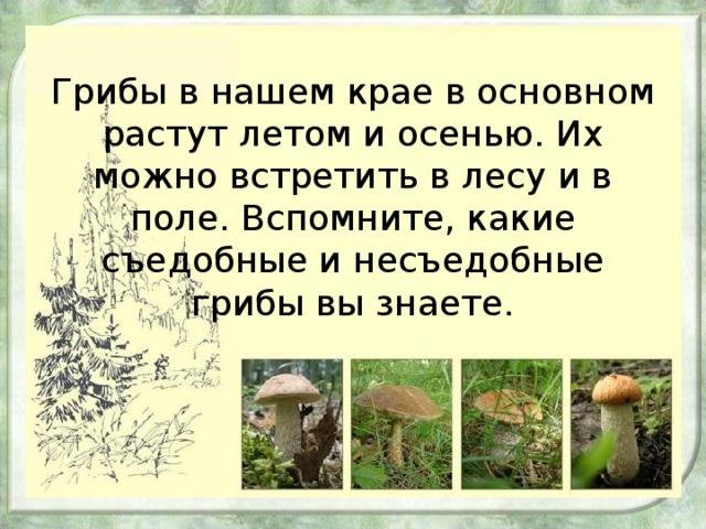 Грибы в нашем крае в основном растут летом и осенью. Их можно встретить в лесу и в поле. Вспомните, какие съедобные и несъедобные грибы вы знаете.