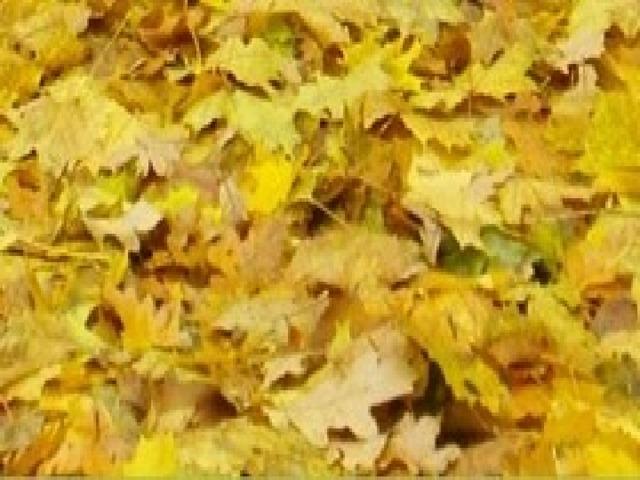 Осень Осень