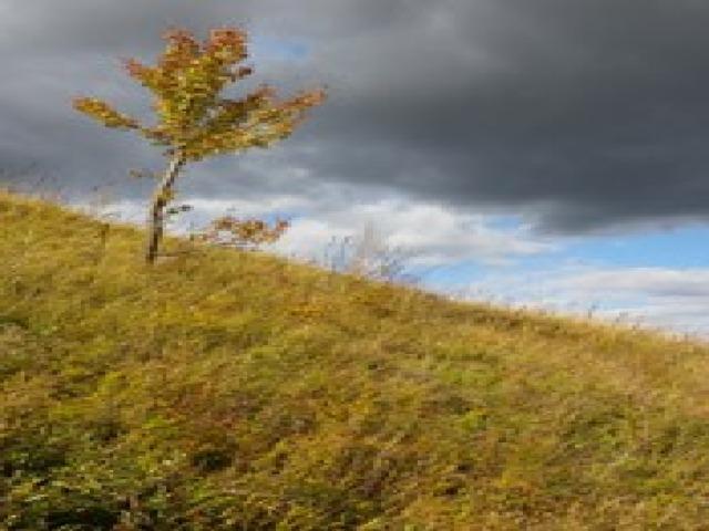 Ноябрь   В ноябре на деревьях остается так мало листьев, что лес обнажается В ноябре на деревьях остается так мало листьев, что лес обнажается