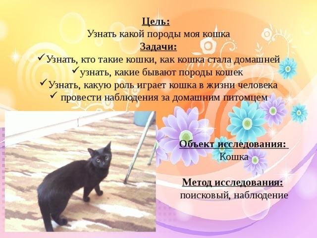 Цель:   Узнать какой породы моя кошка Задачи: Узнать, кто такие кошки, как кошка стала домашней узнать, какие бывают породы кошек Узнать, какую роль играет кошка в жизни человека  провести наблюдения за домашним питомцем Объект исследования:  Кошка Метод исследования:  поисковый, наблюдение