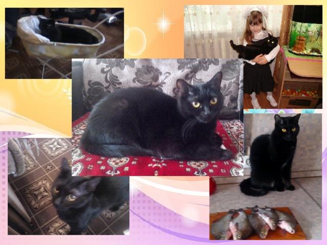 Изучив литературу, я выяснила, что моя кошка - это обычной русской породы. Гладкошерстная, черного окраса. Она любит есть рыбу, «Вискас», «Китикат» и пить воду. Маня любит кататься в кукольной коляске, спит она со мной или с папой, или на кресле. У Маньки есть любимая игра в резиночку. Она приносит ее в зубах и кладет на пол, а я или папа кидает резинку и Манька бежит за ней, берет ее и снова несет. Маня очень веселая, игривая кошка. Я ее очень люблю.