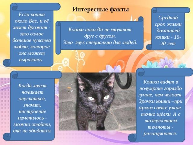 Интересные факты Если кошка около Вас, и её хвост дрожит - это самое большое чувство любви, которое она может выразить. Средний срок жизни домашней кошки - 15-20 лет Кошки никогда не мяукают друг с другом. Это звук специально для людей. Кошки видят в полумраке гораздо лучше, чем человек. Зрачки кошки –при ярком свете узкие, точно щёлки. А с наступлением темноты - расширяются. Когда хвост начинает опускаться, значит, настроение изменилось - можно отойти, она не обидится Проводя поисковую работу, я узнала интересные факты из жизни кошек.