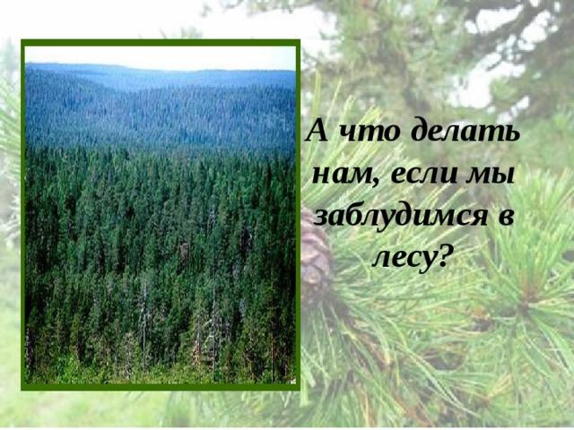 А что делать нам, если мы заблудимся в лесу?