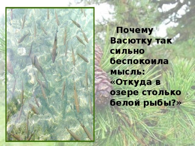 Почему Васютку так сильно беспокоила мысль: «Откуда в озере столько белой рыбы?»