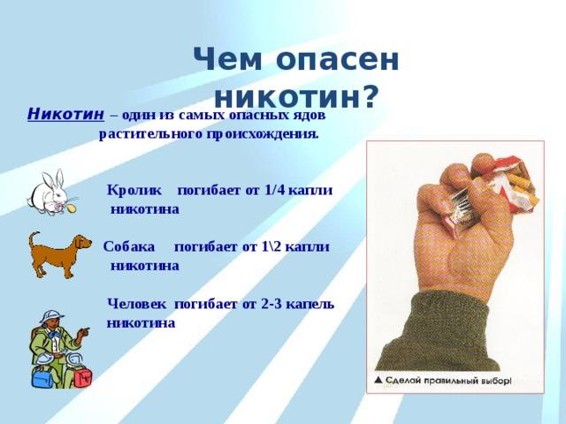 Чем опасен никотин? Никотин  – один из самых опасных ядов  растительного происхождения.    Кролик погибает от 1/4 капли  никотина   Собака погибает от 1\2 капли  никотина   Человек погибает от 2-3 капель  никотина