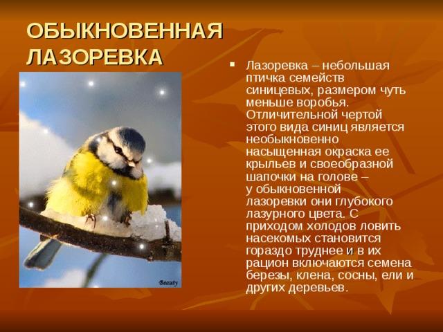 ОБЫКНОВЕННАЯ  ЛАЗОРЕВКА Лазоревка– небольшая птичка семейств синицевых, размером чуть меньшеворобья. Отличительной чертой этого вида синицявляется необыкновенно насыщенная окраска ее крыльев и своеобразной шапочки на голове – уобыкновенной лазоревкиони глубокого лазурного цвета. С приходом холодов ловить насекомых становится гораздо труднее и в их рацион включаются семена березы, клена, сосны, ели и других деревьев.