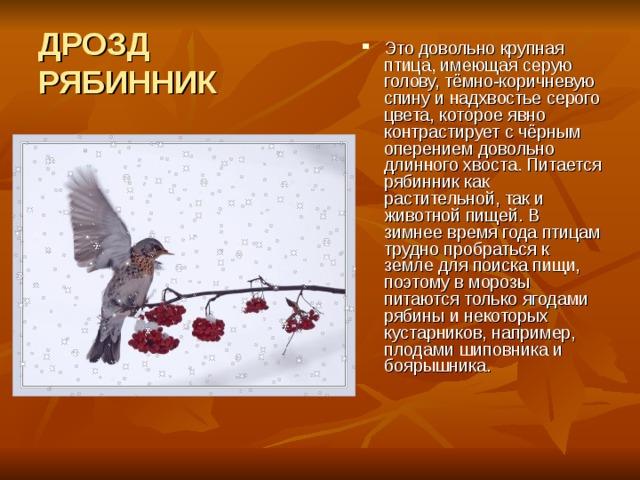ДРОЗД  РЯБИННИК