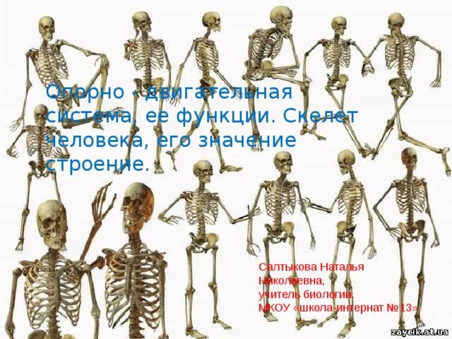 Опорно - двигательная система, ее функции. Скелет человека, его значение строение. Салтыкова Наталья Николаевна, учитель биологии. МКОУ «школа-интернат №13»