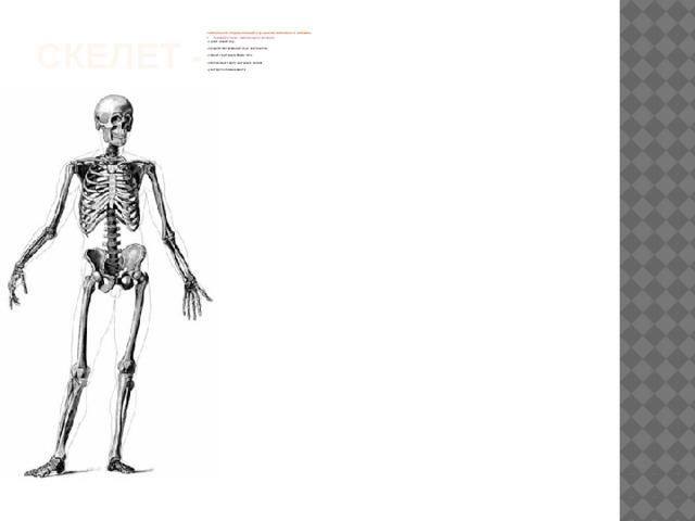 Скелет -  совокупность твердых тканей в организме животных и человека  Н Значение опорно - двигательного аппарата: