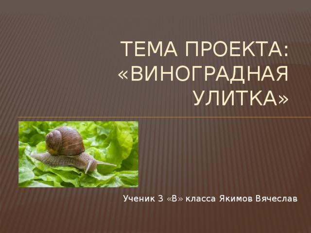 Тема проекта:  «Виноградная улитка» Ученик 3 «В» класса Якимов Вячеслав