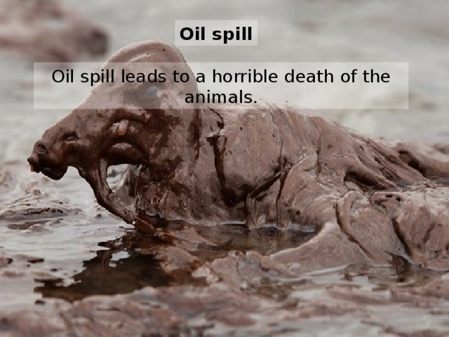 O il spill Oil spill leads to a horrible death of the animals.