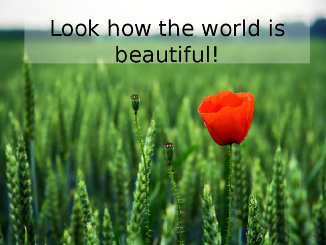 Look how the world is beautiful!