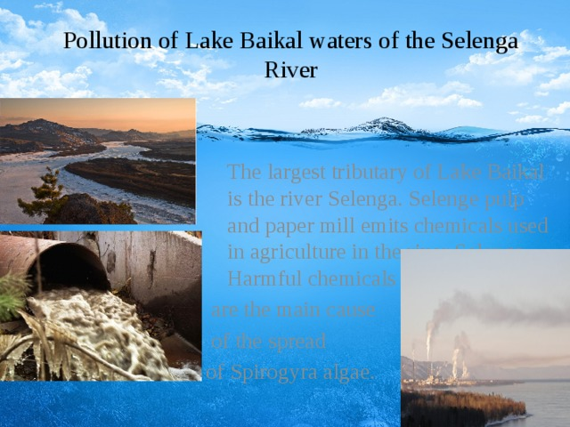 Pollution of Lake Baikal waters of the Selenga River  The largest tributary of Lake Baikal is the river Selenga. Selenge pulp and paper mill emits chemicals used in agriculture in the river Selenga.   Harmful chemicals  are the main cause  of the spread of Spirogyra algae.