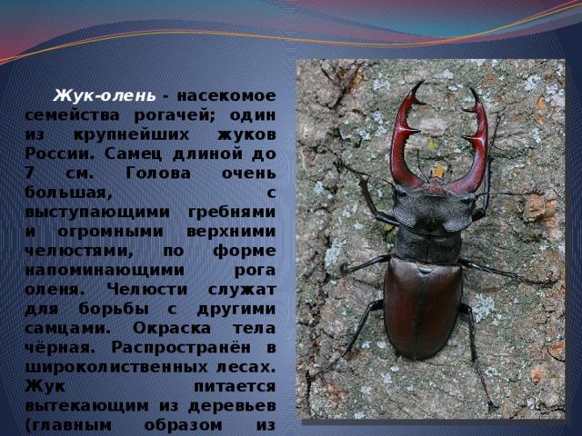 Жук-олень - насекомое семейства рогачей; один из крупнейших жуков России. Самец длиной до 7 см . Голова очень большая, с выступающими гребнями и огромными верхними челюстями, по форме напоминающими рога оленя. Челюсти служат для борьбы с другими самцами. Окраска тела чёрная. Распространён в широколиственных лесах. Жук питается вытекающим из деревьев (главным образом из дуба) соком. Подлежит охране, занесён в Красную книгу.