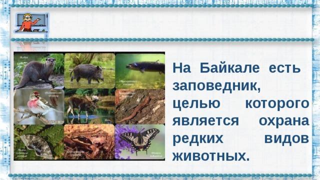 На Байкале есть заповедник, целью которого является охрана редких видов животных.