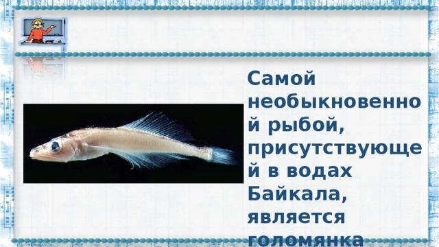 Самой необыкновенной рыбой, присутствующей в водах Байкала, является голомянка живородящая.