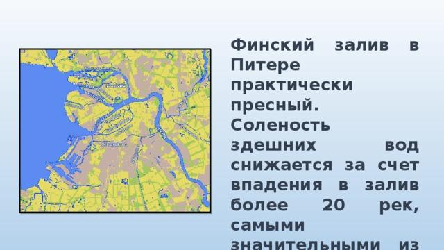 Финский залив в Питере практически пресный. Соленость здешних вод снижается за счет впадения в залив более 20 рек, самыми значительными из которых являются Нева, Кейла и Порвонйоки.