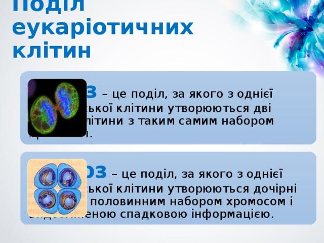 Поділ еукаріотичних клітин Мітоз  – це поділ, за якого з однієї материнської клітини утворюються дві дочірні клітини з таким самим набором хромосом. Мейоз – це поділ, за якого з однієї материнської клітини утворюються дочірні клітини з половинним набором хромосом і видозміненою спадковою інформацією.