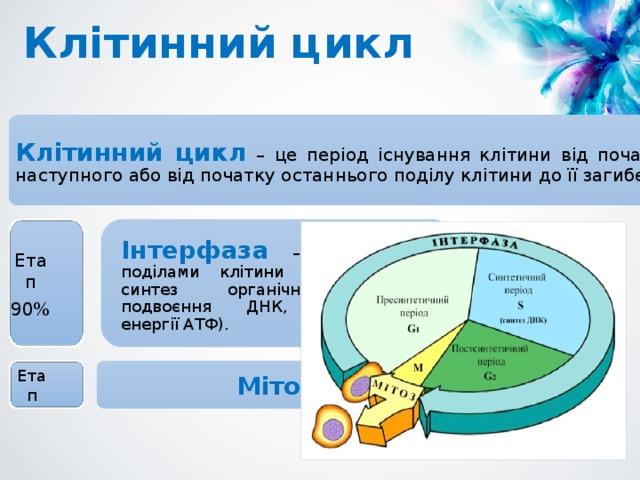 Клітинний цикл Клітинний цикл – це період існування клітини від початку одного поділу до наступного або від початку останнього поділу клітини до її загибелі. Інтерфаза – період між поділами клітини (ріст клітини, синтез органічних сполук, подвоєння ДНК, накопичення енергії АТФ). Етап 90% Мітоз Етап