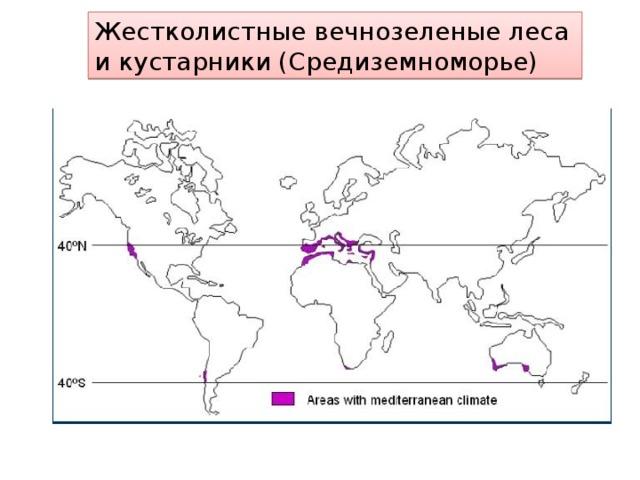 Жестколистные вечнозеленые леса и кустарники (Средиземноморье)