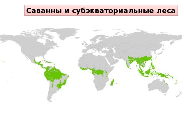 Саванны и субэкваториальные леса