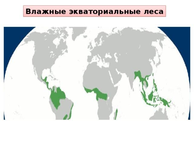 Влажные экваториальные леса В Евразии они занимают достаточно большие территории и разнообразны. Одних только пальм насчитывается более 300 видов. На побережье Филиппинских островов и Малайского архипелага растет кокосовая пальма. В экваториальных лесах растут многочисленные виды бамбуков.