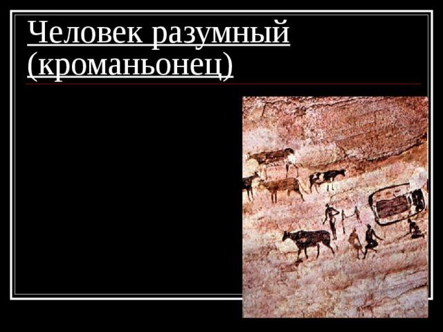 Человек разумный (кроманьонец) 5. из рисунков возникла письменность;  6. началось одомашнивание животных