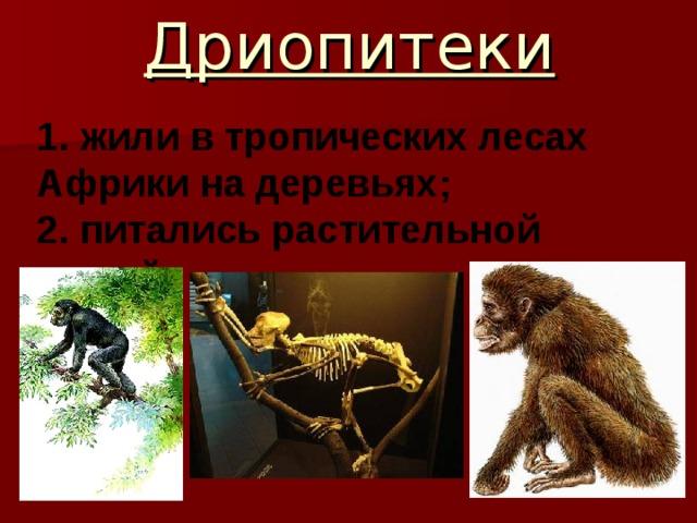 Дриопитеки 1. жили в тропических лесах Африки на деревьях; 2. питались растительной пищей
