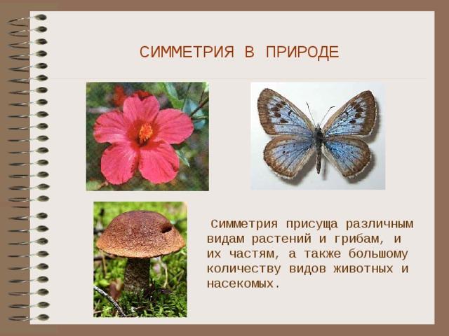 СИММЕТРИЯ В ПРИРОДЕ  Симметрия присуща различным видам растений и грибам, и их частям, а также большому количеству видов животных и насекомых.