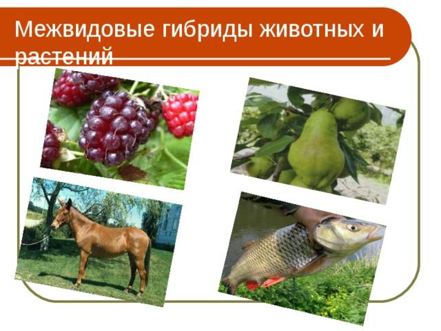 Межвидовые гибриды животных и растений